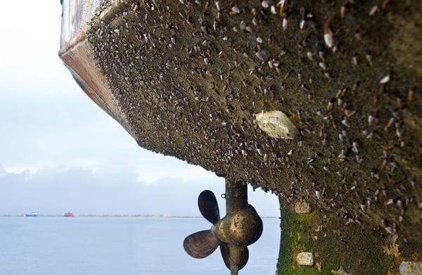 Marine Biofouling on Ship Propeller